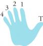 gripebrettet:fingre-hoyre-haand-liten.png